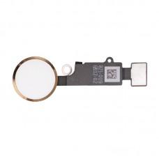 Шлейф кнопки Hоme для iPhone 7 Золотой (Gold) Оригинал
